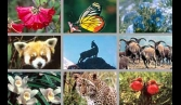 400 plants and animals added to threatened 'Red List'