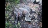 NGO offers reward for capture of elephant killers